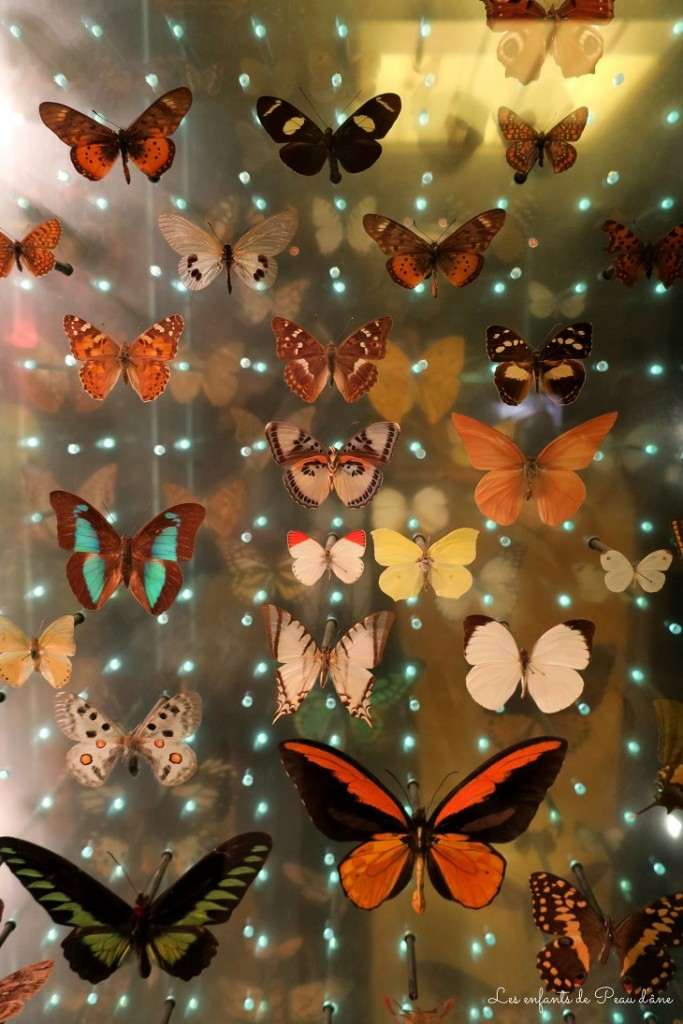 Papillons b